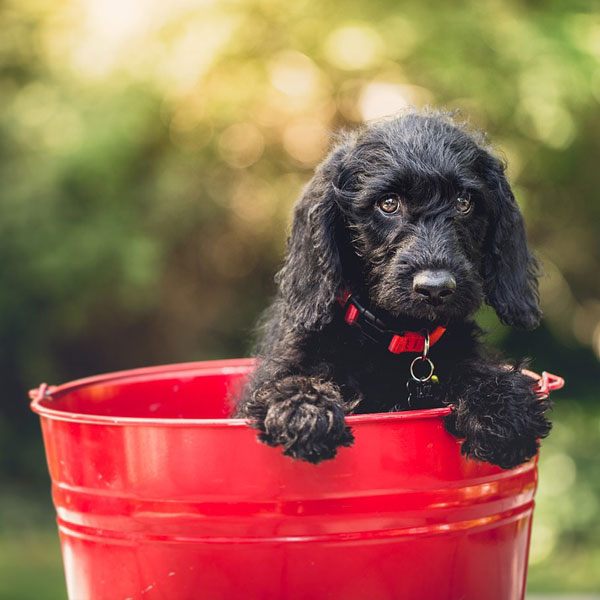 Adorable-dog-bucket-animal-canine