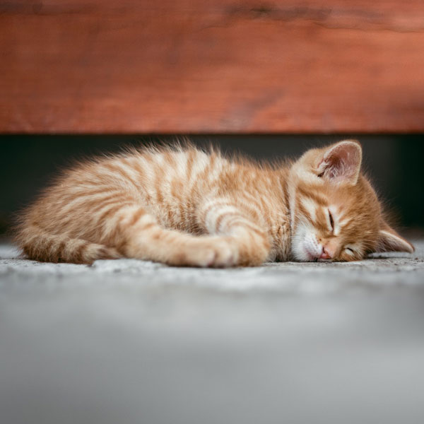 Adorable kitten sleeps on floor