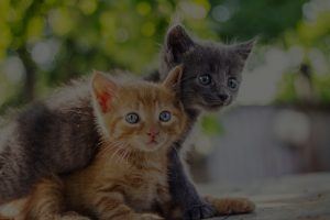 Two adorable kittens playing together