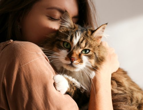 How Does Integrative Medicine Benefit My Pet? Your Questions Answered
